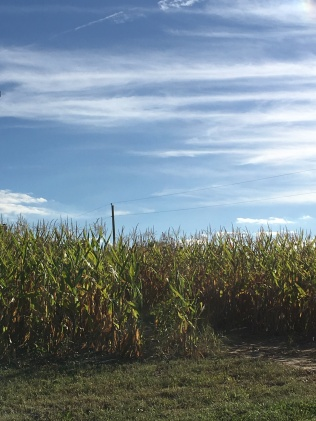 Corn Maze anyone?