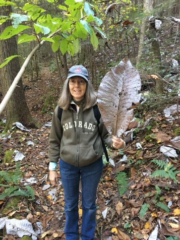 Big Leaf Magnolia on the hike--like snow!