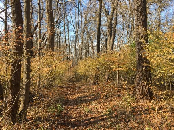 Middle Creek park leaf path