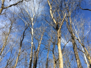 Middle Creek White trees blue sky