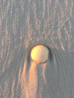 FL Beach walk sea shells at sunrise