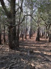 FL Bike ride cypress trees