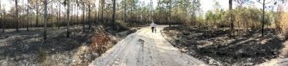 FL Bike ride too heavy sand and burned forest