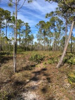 FL Bike trail--see the orange marker