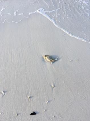 FL Crab