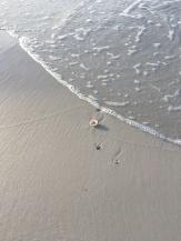 FL Sea Shells