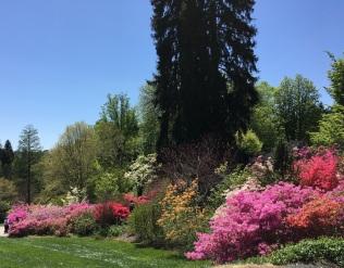 Biltmore azzalia gardens 2