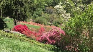 Biltmore azzalia gardens