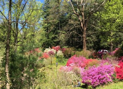 Biltmore in bloom 2