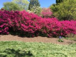 Biltmore in bloom