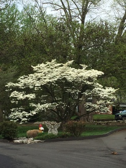 St louis in bloom--view from bike ride