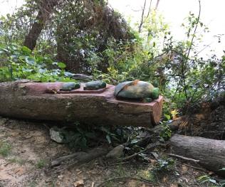 Walking in columbia salamander and live art