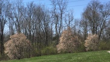week 3--look spring