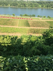 Bike tour 2018 at nierstein Vinyard tour 1