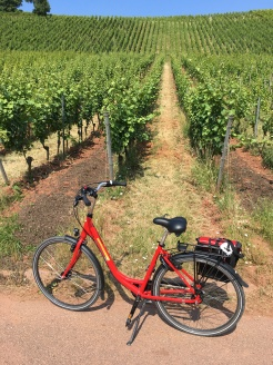 Bike tour 2018 z bike end shot--vinyard
