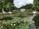 Frankfurt palmgarten lillies