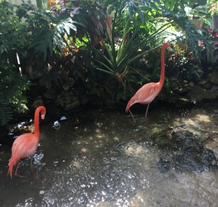 The two flamingos