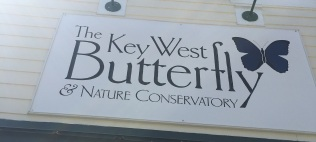 Ride to Keys 2019 fifth day--ride around Key West butterfly 4